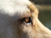 柔道場で見かける盲導犬が示唆するもの